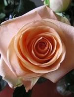 Rose Mason